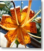 Lily Flower Artwork Orange Lilies 3 Giclee Art Prints Baslee Troutman Metal Print