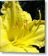 Lily Flower Artwork Yellow Lilies 1 Giclee Art Prints Baslee Troutman Metal Print