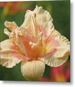 Lily Flower - Daylily Metal Print