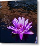 Lily In Pond Metal Print