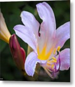 Lily In The Rain By Flower Photographer David Perry Lawrence Metal Print