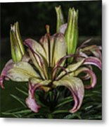 Lily In The Rain Metal Print