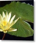 Lily Nilly Metal Print