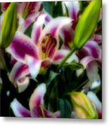 Lily Of The Field Metal Print