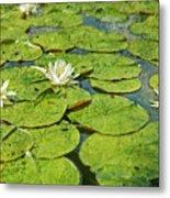 Lily Pad Flowers Metal Print