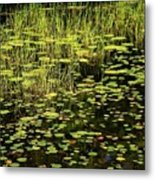 Lily Pad Place Metal Print