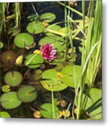 Lily Pad Pond In High Noon Sun Metal Print