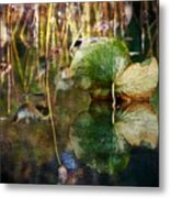 Lily Pad Reflection Oil Metal Print