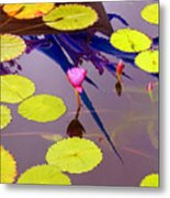 Lily Pads 2 Metal Print