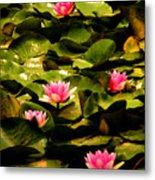 Lily Pads Above Sunken Treasure Metal Print