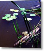 Lily Pads And Reeds Metal Print