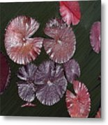 Lily Pads In The Pond Metal Print