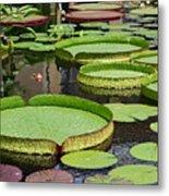 The Lily Pond Metal Print