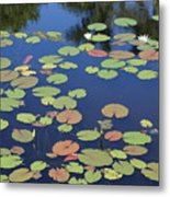 Lily Pads On Blue Pond Metal Print
