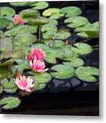 Lily Pond Monet Metal Print