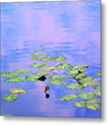 Laying Low Like A Lily Pond  Metal Print