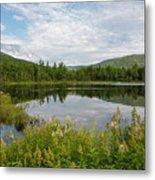 Lily Pond - White Mountains, New Hampshire Metal Print
