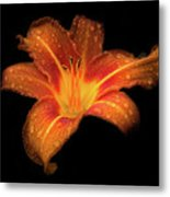 Lily Raindrops In Giverny, France Metal Print