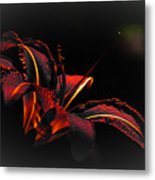 Lily Red-black  Metal Print