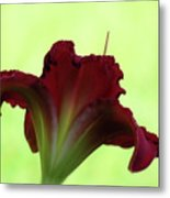 Lily Red On Green Metal Print