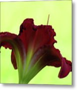 Lily Red On Yellow Green - Daylily Metal Print