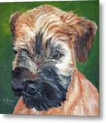 Lily, Soft Coated Wheaten Puppy Metal Print