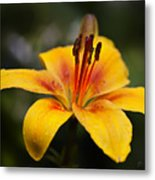 Lily Was Here Metal Print
