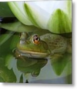 Lilyfrog - Frog With Water Lily Metal Print