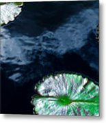 Lilypads And Sky Reflections Metal Print