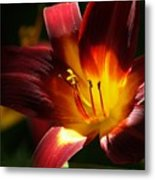 Lily's First Light Metal Print