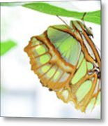 Lime Greens Metal Print