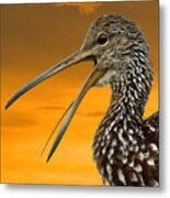 Limpkin At Sunset Metal Print
