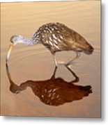 Limpkin In The Mirror Metal Print