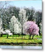 Line Of Flowering Trees Metal Print