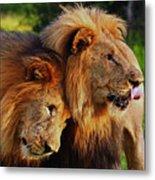 Lion 22 Metal Print