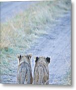 Lion Cubs Walking Together In Masai Mara Metal Print by Mehmed Zelkovic