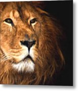 Lion Head Oil Painting Metal Print