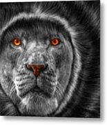 Lion Lady   -3 Metal Print