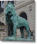 Lion Looking Out Metal Print