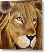 Lion Male Metal Print