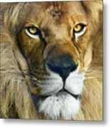 Lion Of Judah II Metal Print