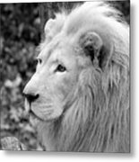 Lion Oh My Metal Print