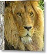 Lion Portrait Metal Print