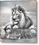 Lion Resting  Metal Print