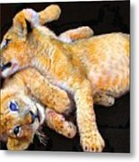 Lion Wrestling Metal Print