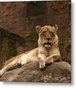 Lioness Metal Print by B Rossitto