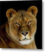 Lioness. No.2 Metal Print