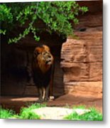 Lions And Tigers And...no Just A Lion Metal Print