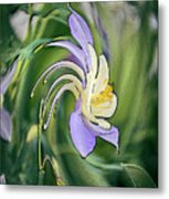Liquid Columbine Metal Print