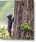 Little Bear Big Tree Metal Print